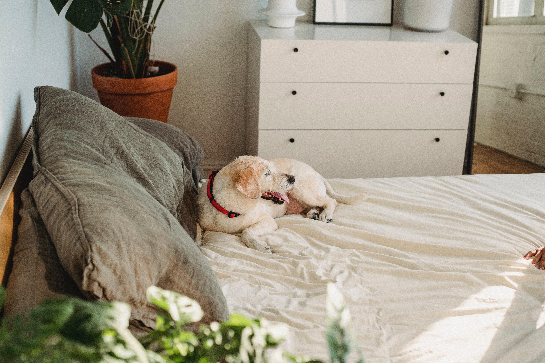 Aranżacja sypialni w zgodzie z naturą